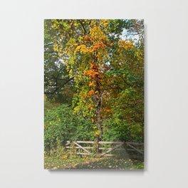 Nature's Chorus Metal Print