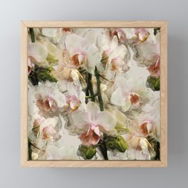 Painted Orchids Framed Mini Art Print