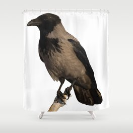 Hooded Crow Isolated Shower Curtain
