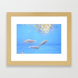 Barcelona Aquarium III Framed Art Print