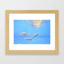 Barcelona Aquarium III Framed Art Print