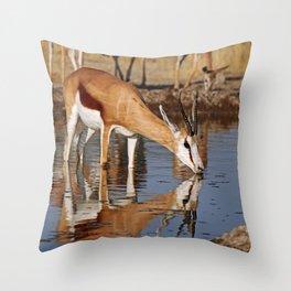 Drinking Springbok - Africa wildlife Throw Pillow