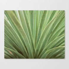 Agave no. 1 Canvas Print
