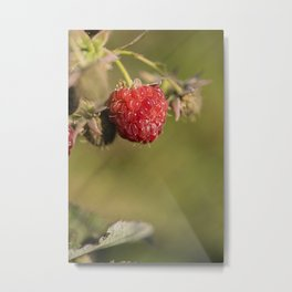wild berries #12 Metal Print