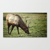 elk Canvas Prints featuring Elk by Ian Terpin