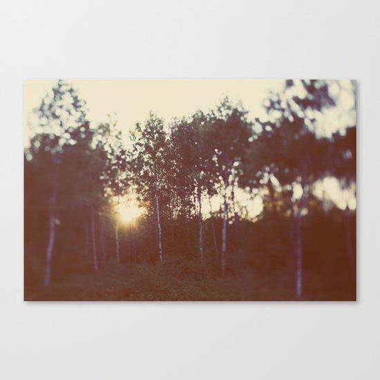 Silent Birch Canvas Print