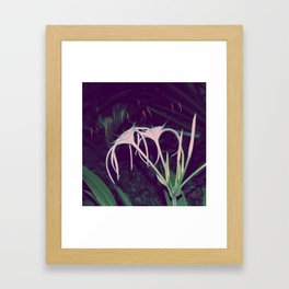 Spider Lily Framed Art Print