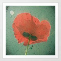 poppy Art Prints featuring Poppy by Cassia Beck