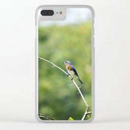 Longwood Gardens - Spring Series 240 Clear iPhone Case