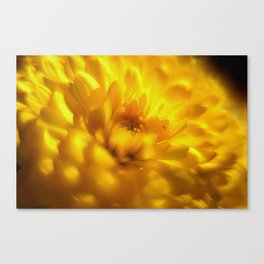 Sea of Gold Canvas Print