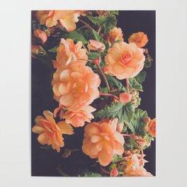Pretty in Peach Poster