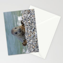 Gray seal - Kegelrobbe Stationery Cards