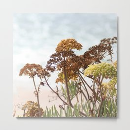 Succulent wild flowers by the sea Metal Print