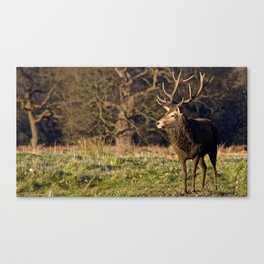 The Stag Canvas Print