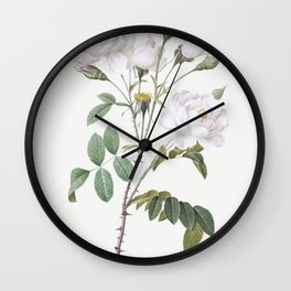 Rosa campanulata alba also known as Pink Bellflowers to White Flowers from Les Roses (1817-1824) by Wall Clock
