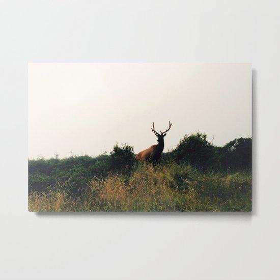 Prairie Creek Elk Metal Print