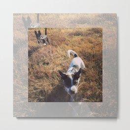 Puppy Life Metal Print
