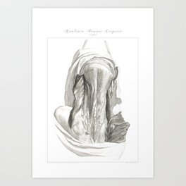 Human Anatomy Art Print MUSCLE SPLENIUS CAPITIS Vintage Anatomy, doctor medical art, Antique Book Pl Art Print