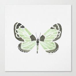 Green Grass Spring Butterfly Canvas Print