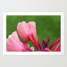 Canna Lily Tropical Macro #3 Art Print