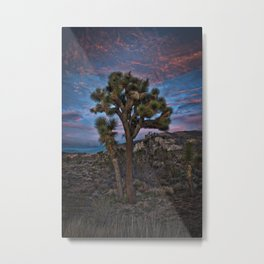 Joshua Tree Alone, Mojave Desert, California Metal Print