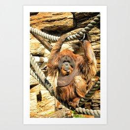 Orangutan. Art Print