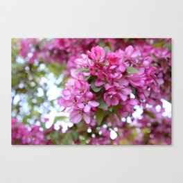 Deep pink blossom Canvas Print