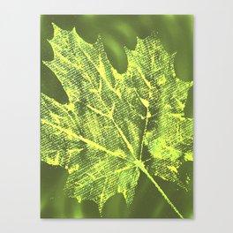 Eco botanical art print Canvas Print