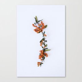 Bittersweets Canvas Print