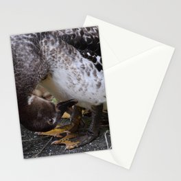 Muscovy Duck Dynasty #1 captured by Jo DiLorenzo Stationery Cards