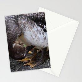 Muscovy Duck Dynasty #1 captured by Jo DiLorenzo Stationery Cards