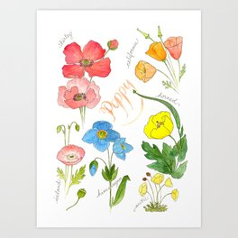 Types of Poppies Art Print