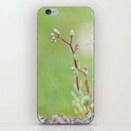 Nature simplicity iPhone Skin