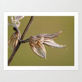 Autumn Sage Flower Art Print