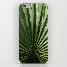 Fan Palm iPhone Skin