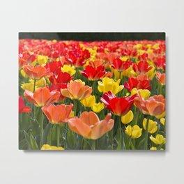 The Tulip Garden Metal Print