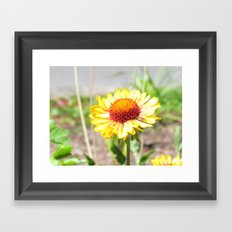 Orange Burst Framed Art Print