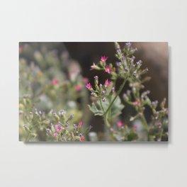 Tiny Pink Wildflowers Coachella Valley Wildlife Preserve Metal Print