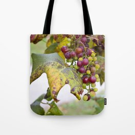 Green and purple grapes on the vine Tote Bag