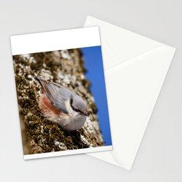 Eurasian nuthatch Stationery Cards