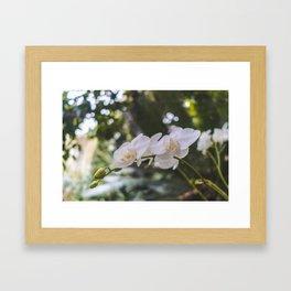 Flower, Royal Botanic Garden Edinburgh Framed Art Print
