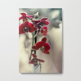 The mystery of orchid(11) Metal Print