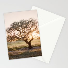 Lone Oak at Golden Hour / Florida Fine Art Film Photography Stationery Cards