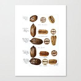 Nuts - Fruit Illustration Canvas Print