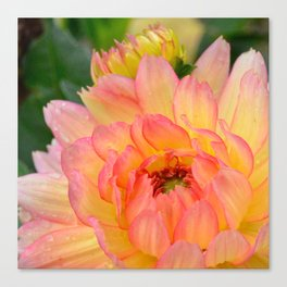 """Coral Tipped"" Dahlia by Teresa Thompson Canvas Print"