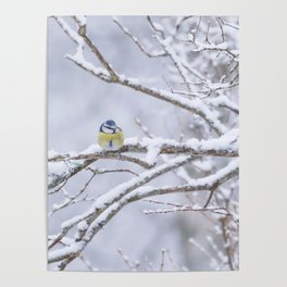 Blue Tit On A Snowy Branch Winter Scene #decor #society6 Poster