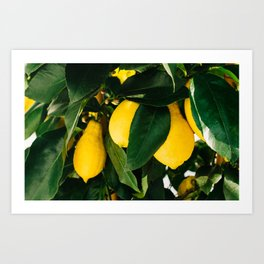 Amalfi Coast Lemons Art Print