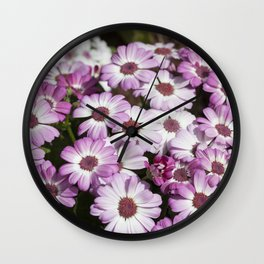 Cineraria Pink Wall Clock