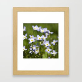 Country Wildflowers Framed Art Print
