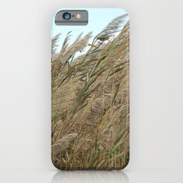 Tall marsh grasses blowing in the wind iPhone Case